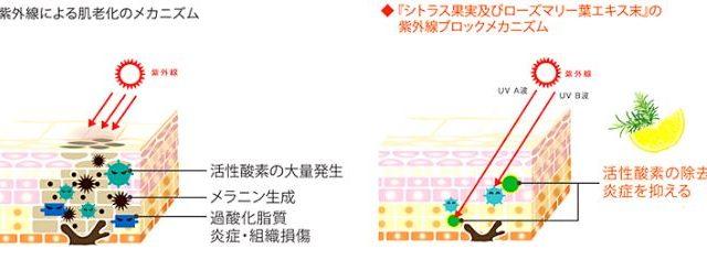 UVスティックゼリーの紫外線対策効果