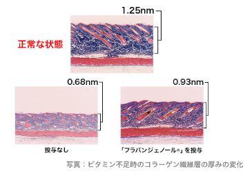 リブランコートのコラーゲン生成促進効果
